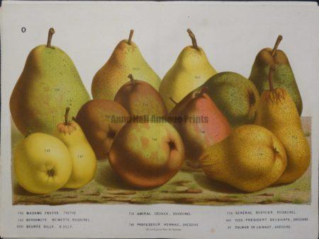 original pear lithograph