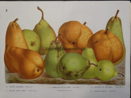 antique pears lithograph