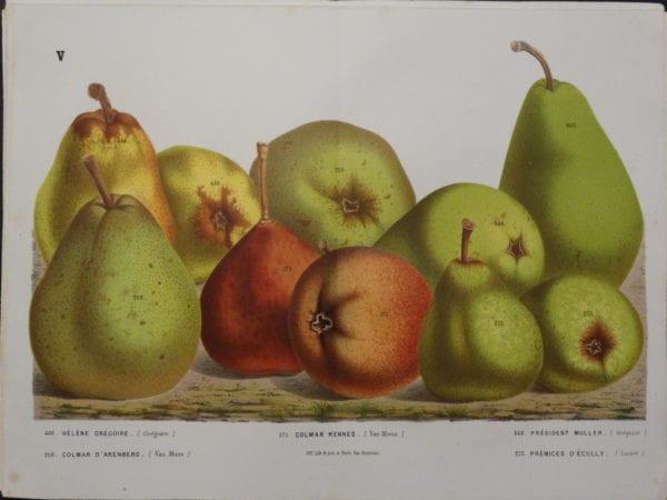 Van Houtteano Pears Pl V $245