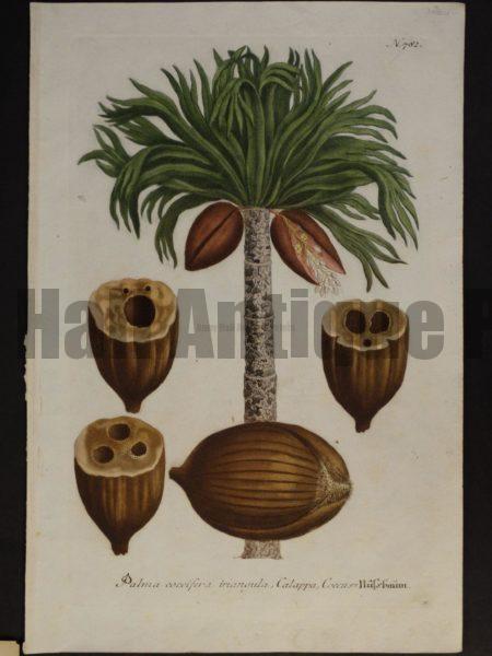 Johanne Weinmann Palm Engraving