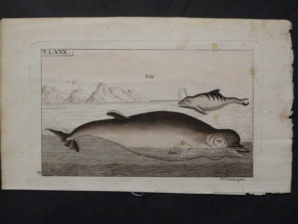 porpoises dolphins