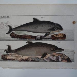 Wilhelm Whales T.LXXVIII.