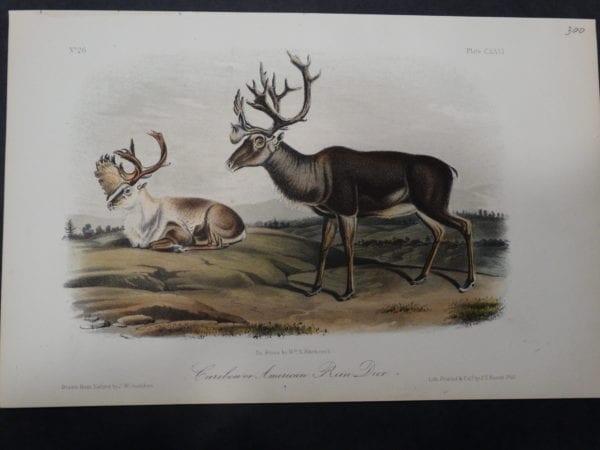 Woodland Audubon Caribou $300. 1855 Hand Coloured Lithograph J.W. Audubon J.T. Bowen, Philadelphia.