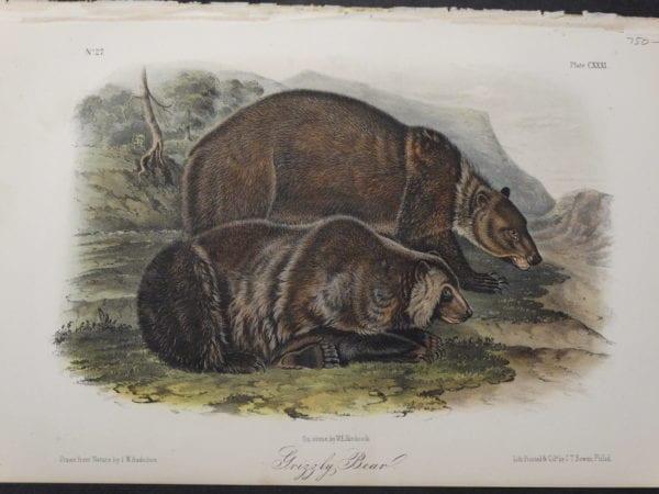 Woodland Audubon Grizzly Bear $750. 1855 Hand-colored lithograph, J.W. Audubon, J.T. Bowen, Philadelphia.