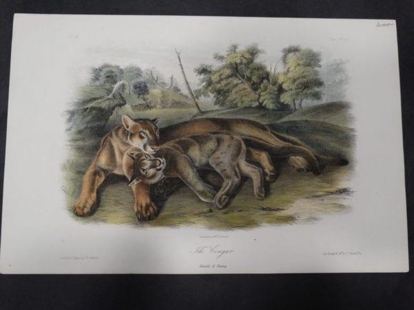 Woodland Audubon The Cougar $600. 1855 Hand-colored Lithograph, J.W. Audubon J.T. Bowen, Philadelphia.
