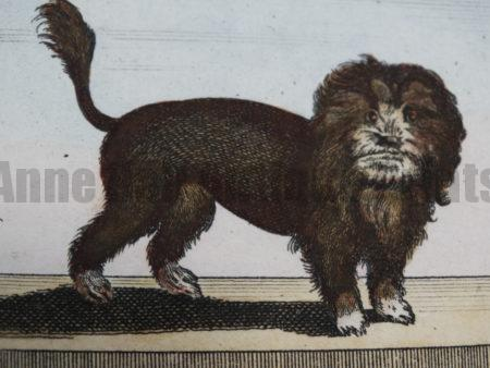 We have exquisite sets of antique dog engravings and lithographs