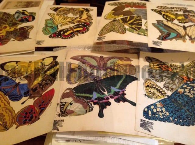 Seguy Pochoir Papillons