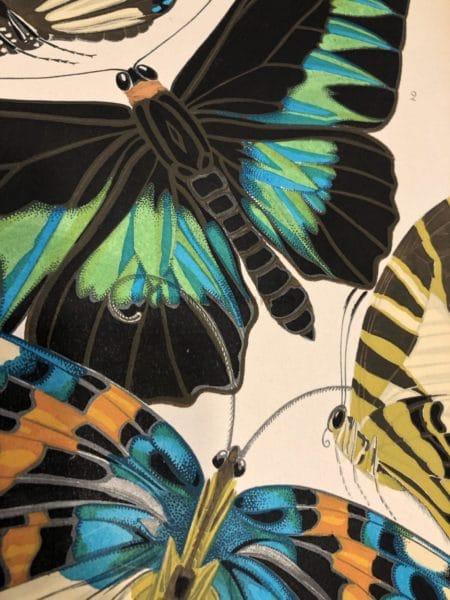 Seguy Butterflies Paris Pochoir 1926